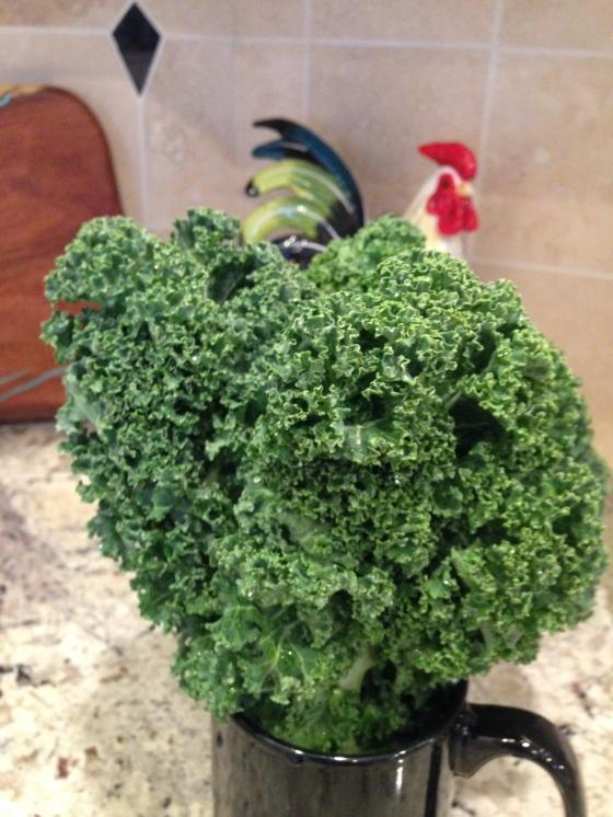 Kale, a Cash Crop?